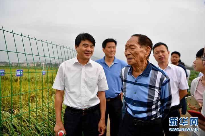"""(爱国情 奋斗者·图文互动)(1)一颗稻谷里的爱国情怀——记""""杂交水稻之父""""袁隆平"""