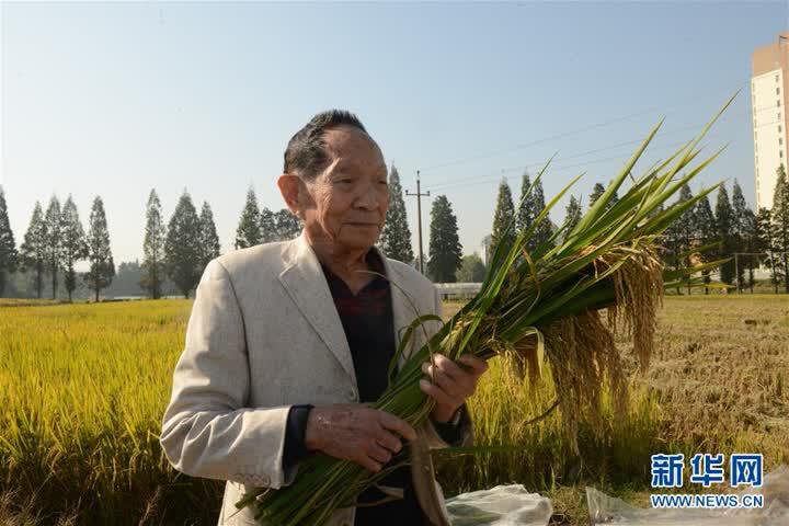 """(爱国情 奋斗者·图文互动)(3)一颗稻谷里的爱国情怀——记""""杂交水稻之父""""袁隆平"""