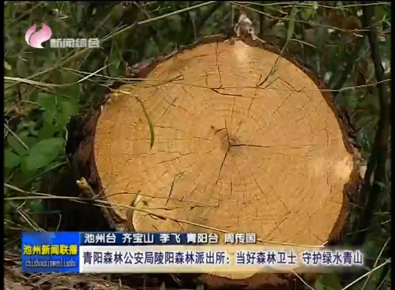 青阳森林公安局陵阳森林派出所:当好森林卫士