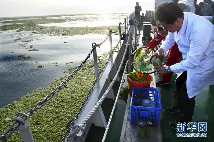 黃海海域滸苔分布面積超過5萬平方公里