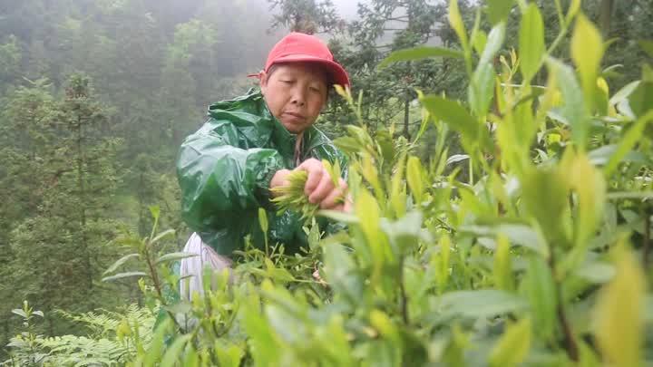 绿水青山党旗红合成版_20191209093218.JPG