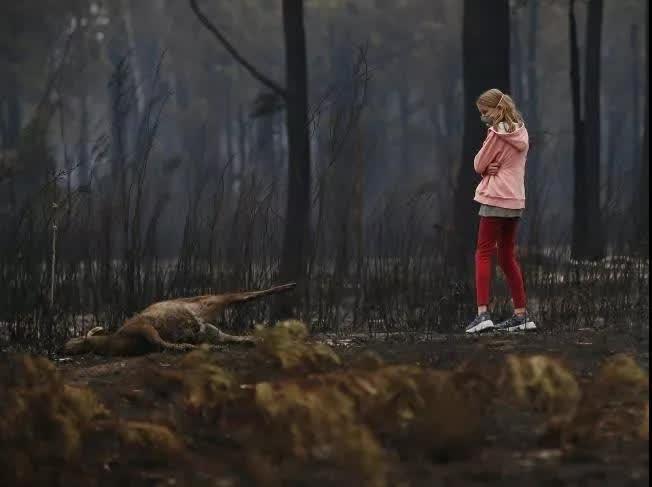 ▲小女孩忧伤地望着被山火毁灭的生灵