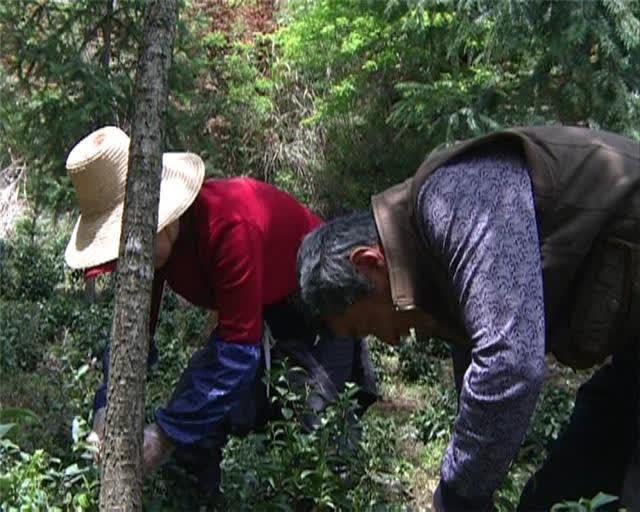 祠村:产业扶贫 助力脱贫