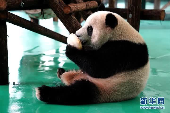 """上海:動物園里的""""清涼夏日"""""""